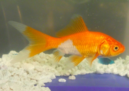 New Goldfish 2010-02-05